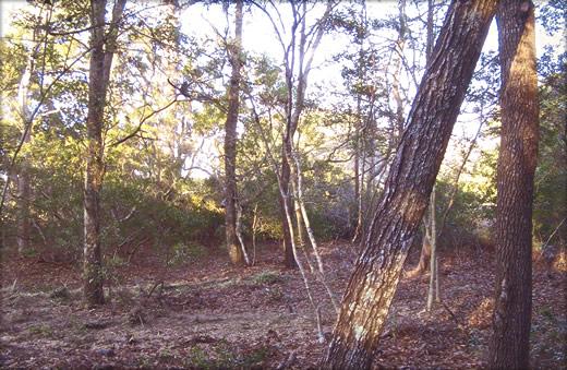 Bush Hogging Jacksonville FL