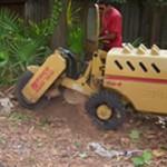 stump-grinding-jacksonville-fl